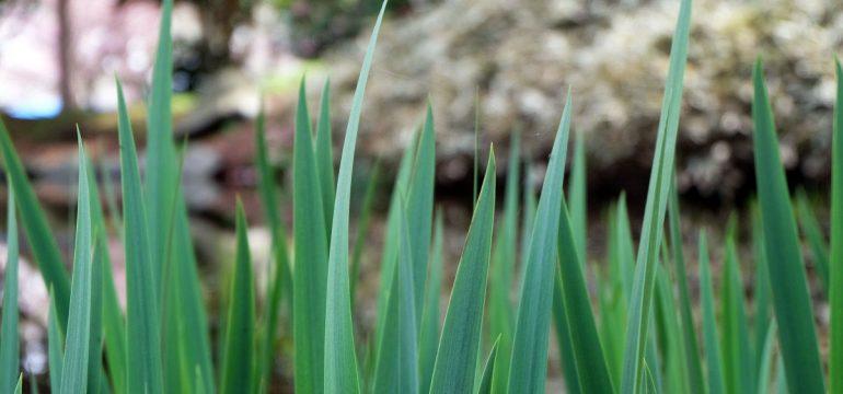 「草」の意味を解説